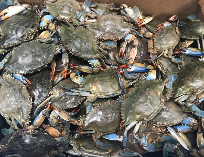 Blue Crab Wholesale Seafood Stuart Florida
