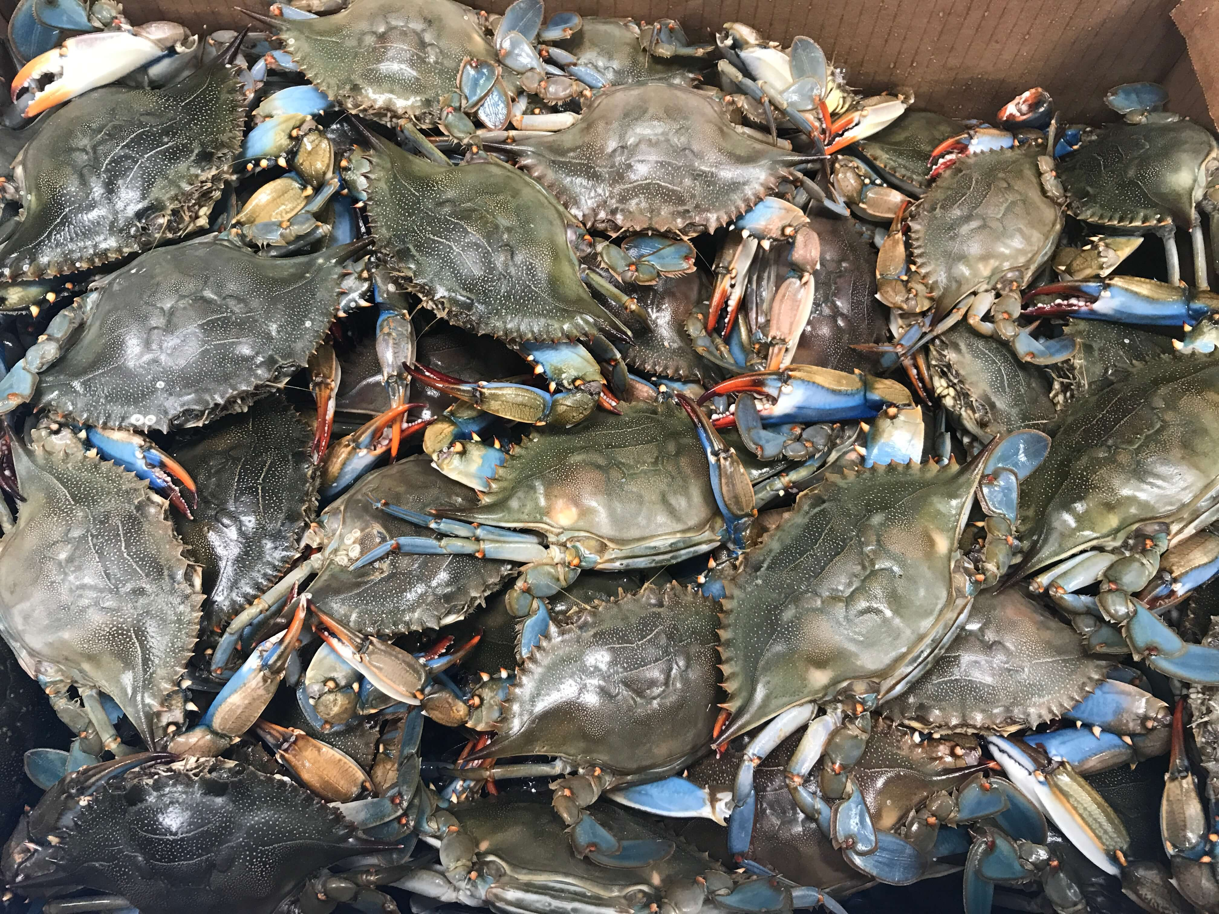 CRAB Archives - New England Wholesale Fish & Lobster
