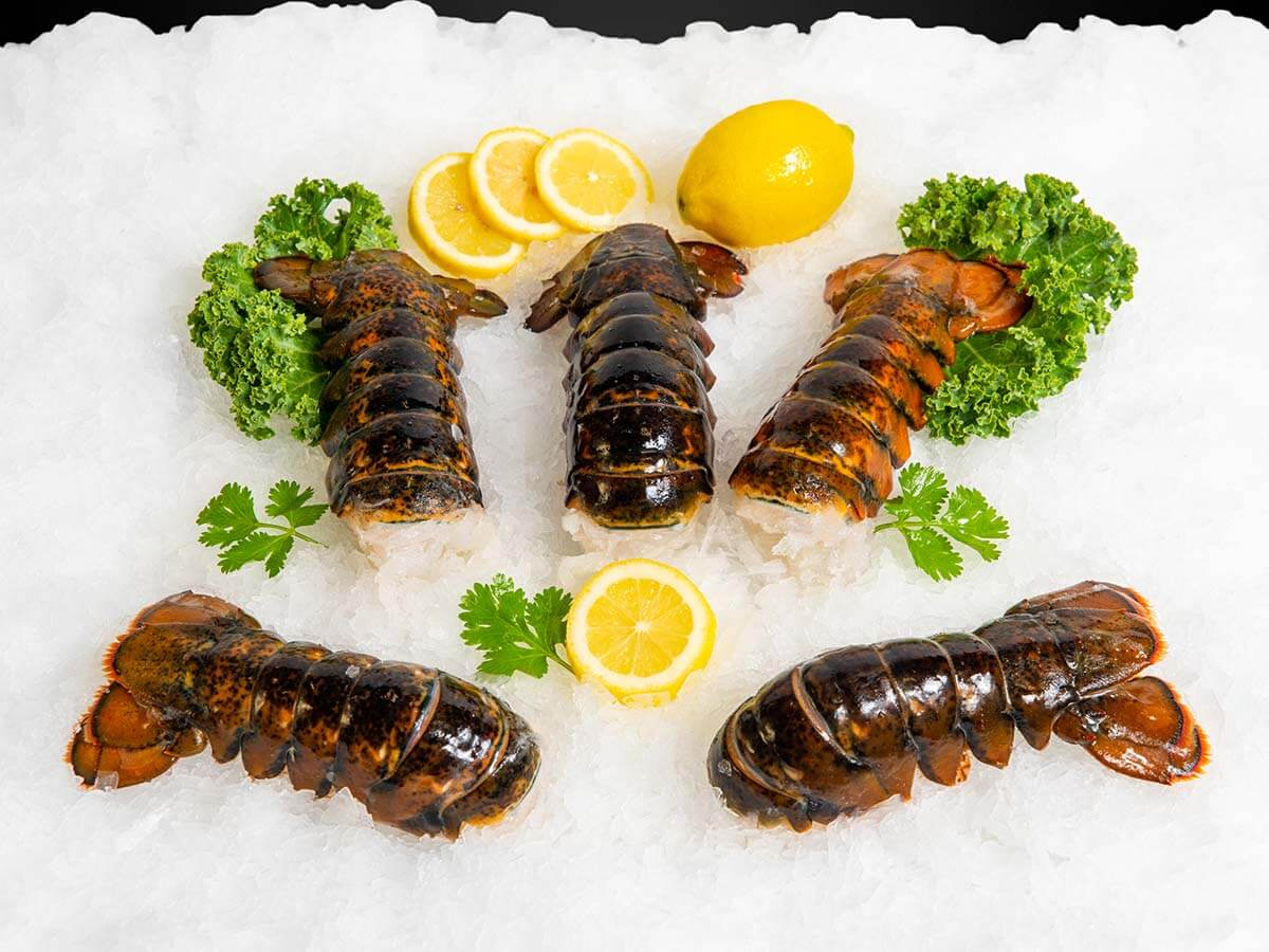 New-England-Wholesale-Fish-Lobster-Stuart-FL-Seafood-Wholesaler-maine-lobster-tails-1