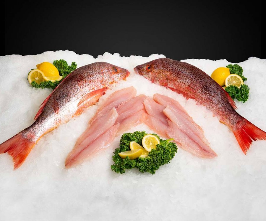 Wholesale Seafood Photo Gallery Image: Lane Snapper