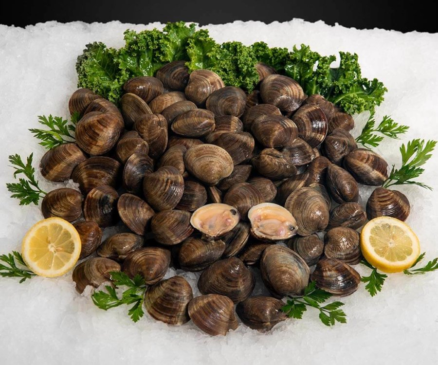 Wholesale Seafood Photo Gallery Image: middleneck clams