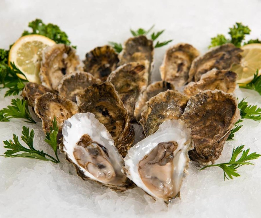 Wholesale Seafood Photo Gallery Image: Oysters