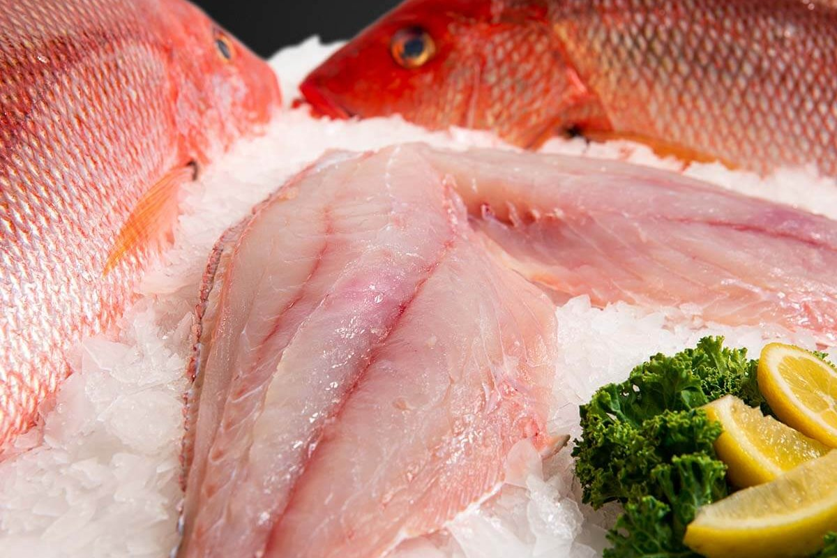Wholesale Seafood Photo Gallery Image: Red Snapper
