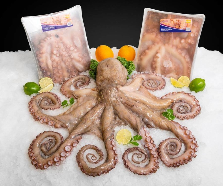 Wholesale Seafood Photo Gallery Image: Spanish Octopus