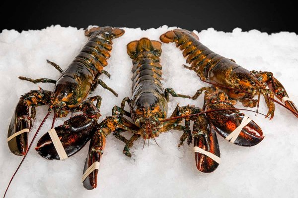 Wholesale Seafood Photo Gallery Image: Live Maine Lobster