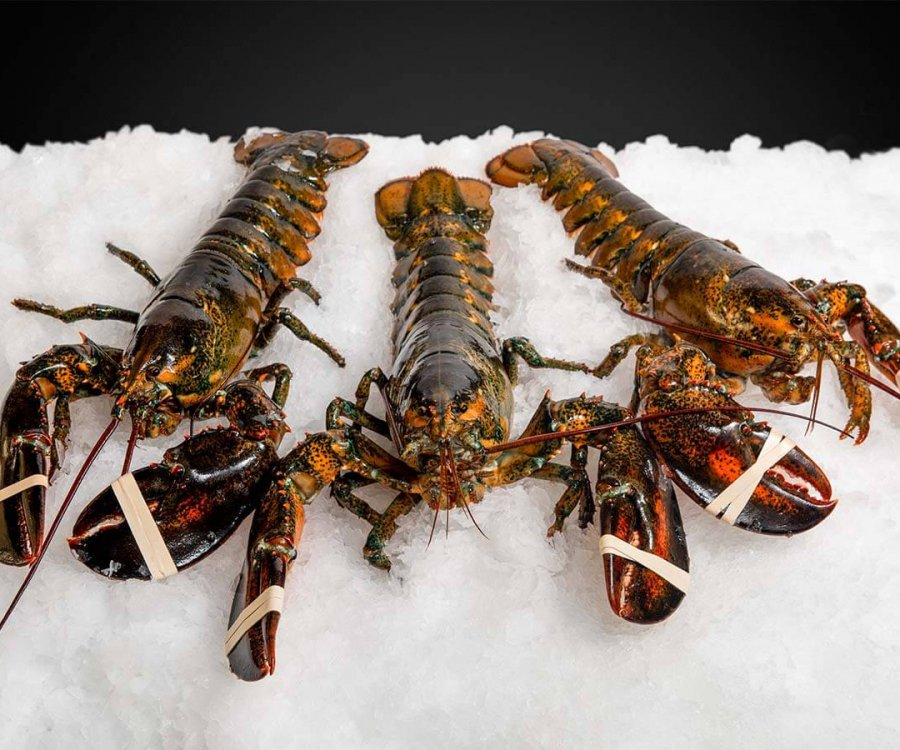 New-England-Wholesale-Fish-Lobster-Stuart-FL-Seafood-Wholesaler-maine-lobster-1