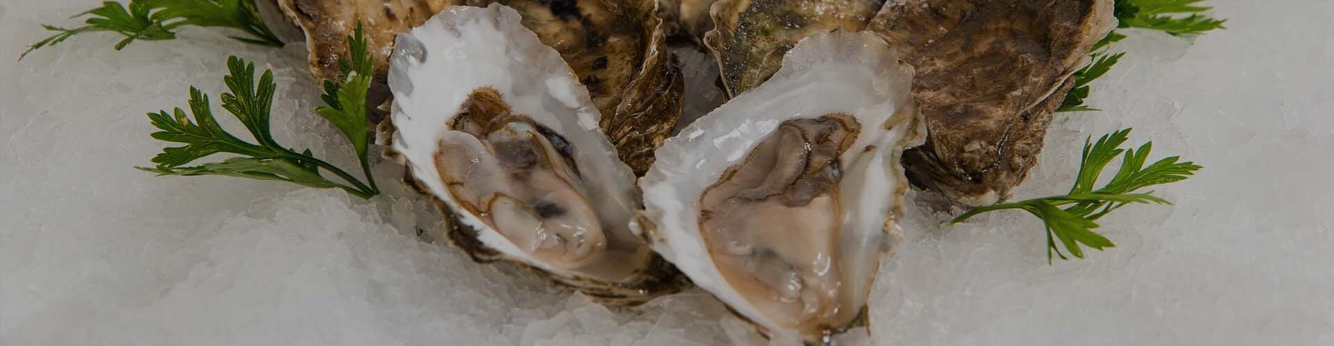 Seafood Suppliers- South Florida   New England Wholesale